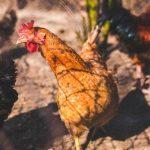 Proteon Pharmaceuticals – partnerstwo handlowe z DuPont Animal Nutrition