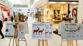 Galeria Północna i Lasy Państwowe zapraszają na wystawę owadów
